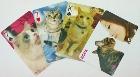 貓咪撲克牌(三版)